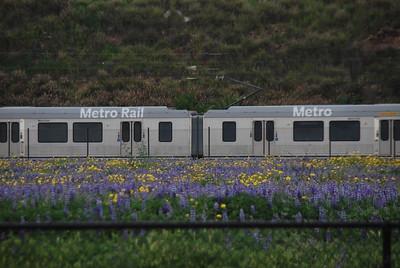 Wild Flowers & Metro Gold Line