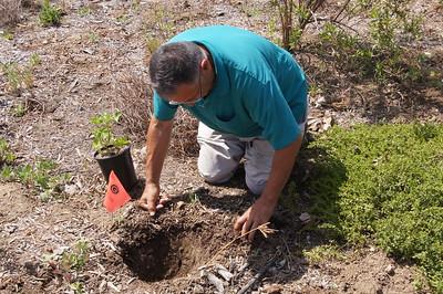 Planting Natives