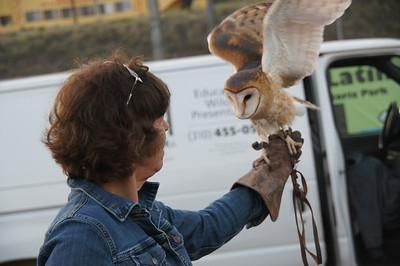 Wildworks - Barn Owl