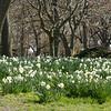 Parks w- Nico - Glen-35