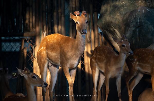 Dusit Zoo