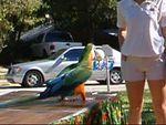 2004 Animal Safari Video
