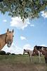 Horse country near Millsap