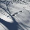 Tracks & leaf #4