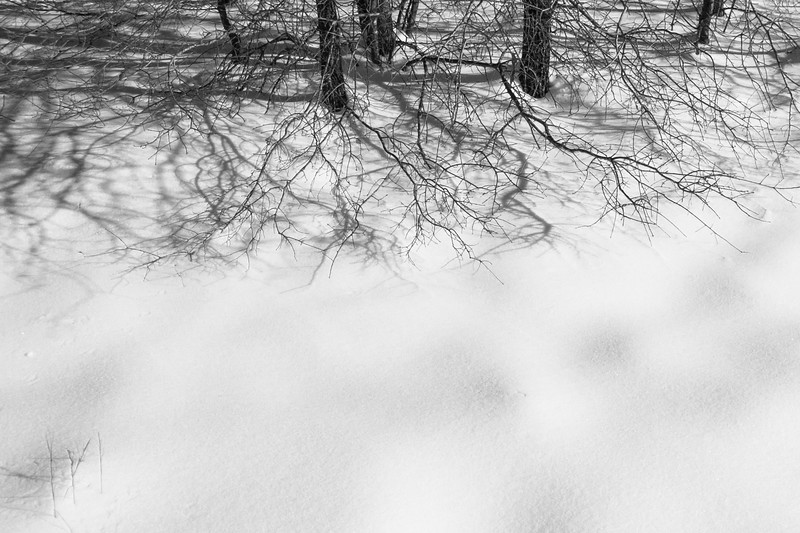 Snow & branches #1
