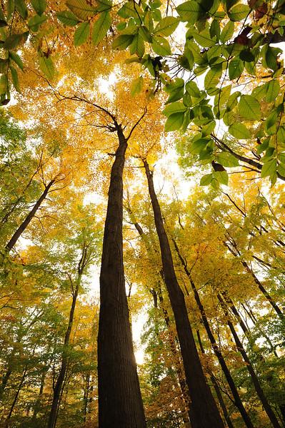 Big Woods 103111 32 DSC_6130