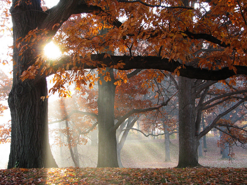 Gods-rays in autumn #2, Genesee Valley Park, Rochester NY