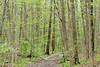 Bluebell woods 46 DSC_0176