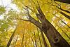 Big Woods 103111 66 DSC_6201