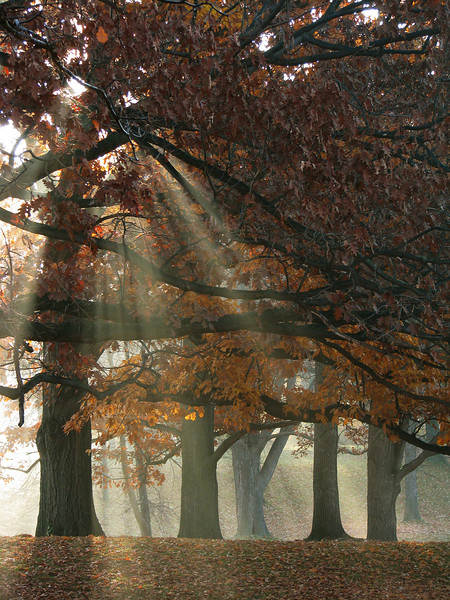 Gods-rays in autumn #4, Genesee Valley Park, Rochester NY