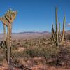 Saguaro National Park, Rincon Mountain District, Arizona