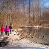 A Raft of Ducks