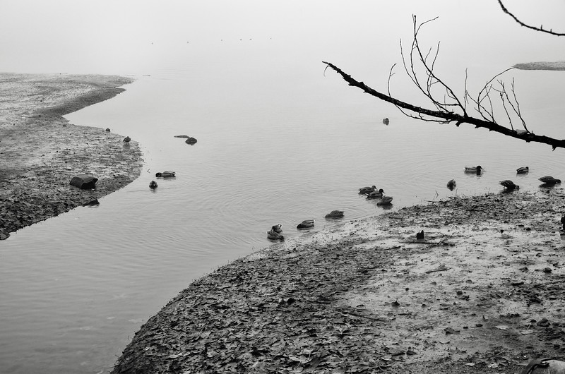 Ducks at the Sandbar