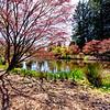 Rustic Spring