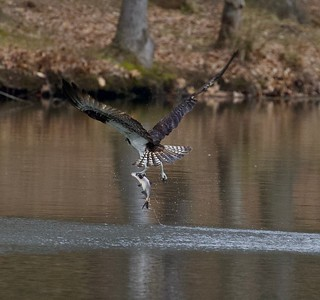 One legged Catch