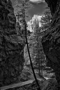 bryce_navajo_trail_1_bw