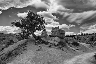 bryce_navajo_trail_3bw