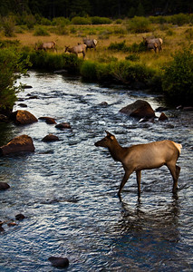 rockies_day5_215_elk