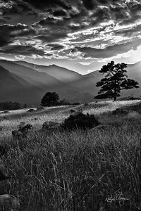 rockies_tree_in_field_harold139