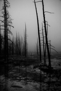 Sentries In Desolation, Yellowstone