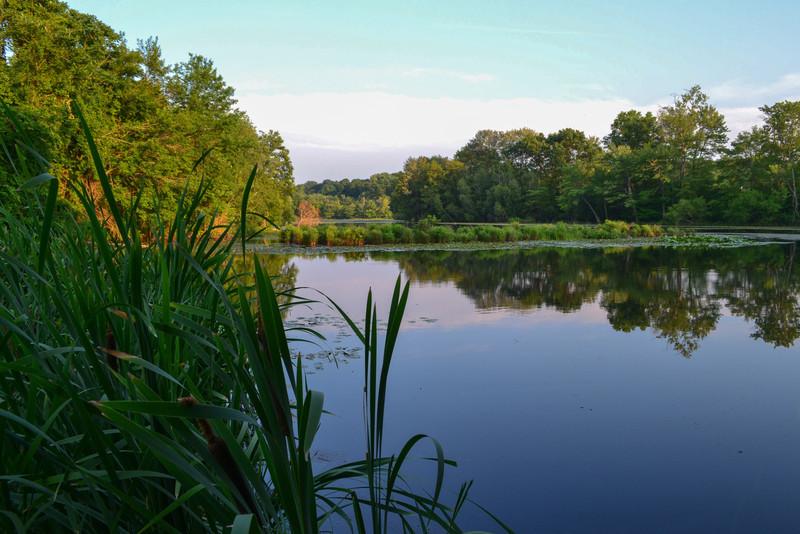 Peaceful Pond - Lily Pond, Oakland, NJ