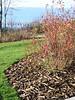 november landscape and sod