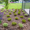 landscaping at park
