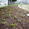 native plant landscaping at completion of park
