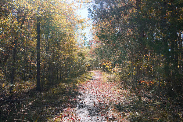 Laurel Springs/ Tilghman Park