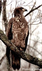 eagle_02m