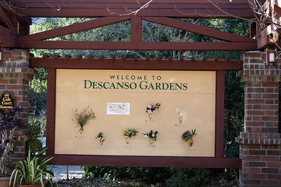 Descanso Gardens, La Canada Flintridge, CA.