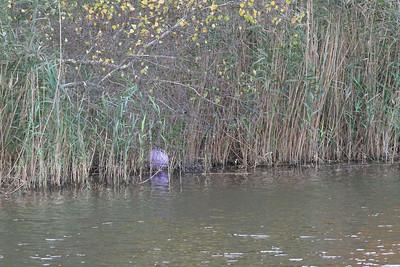 Cranberry Bog, Quiogue, NY.
