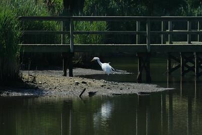 Life at the duck pond.  Brook Road, Westhampton Beach, NY.