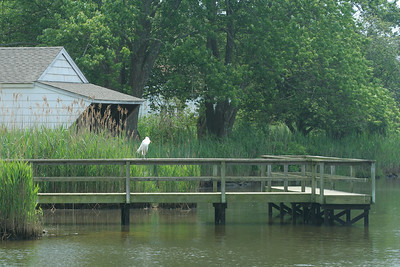 Life at the duck pond, Brook Rd, Westhampton Beach, NY.