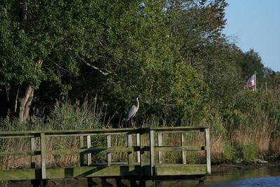 Cranberry Bog, Westhampton Beach, NY.