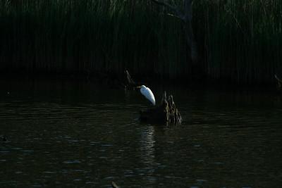Quiogue Canoe Launch.