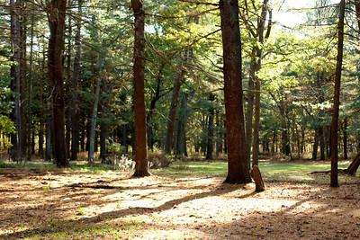Southaven County Park, Yaphank, NY.