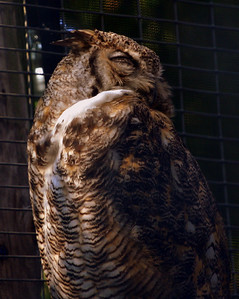 03 August 2009. Quogue Wildlife Refuge, Quogue, NY.