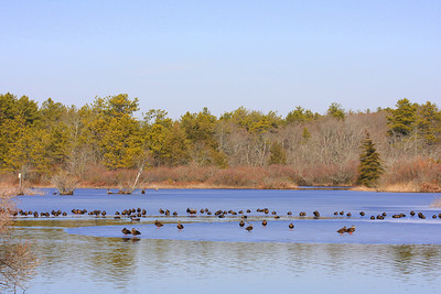 Quogue Wildlife Refuge, Quogue, NY.
