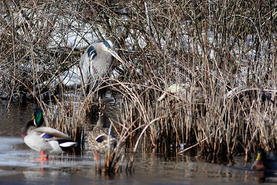 Quogue Wildlife Refuge