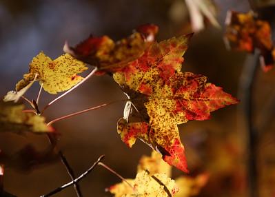 An autumn day spent at the Wertheim National Wildlife Refuge