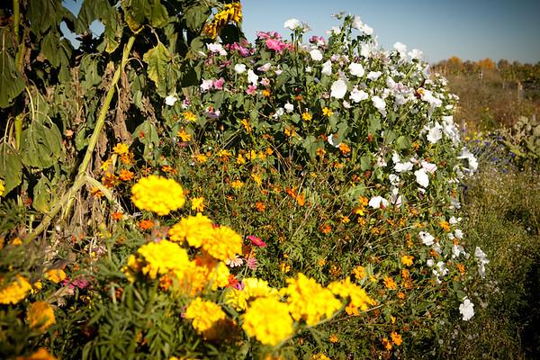 Leduc Community Gardens