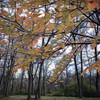 Fall is Fading Away.