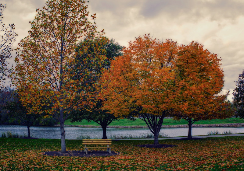 Park bench in the Fall.