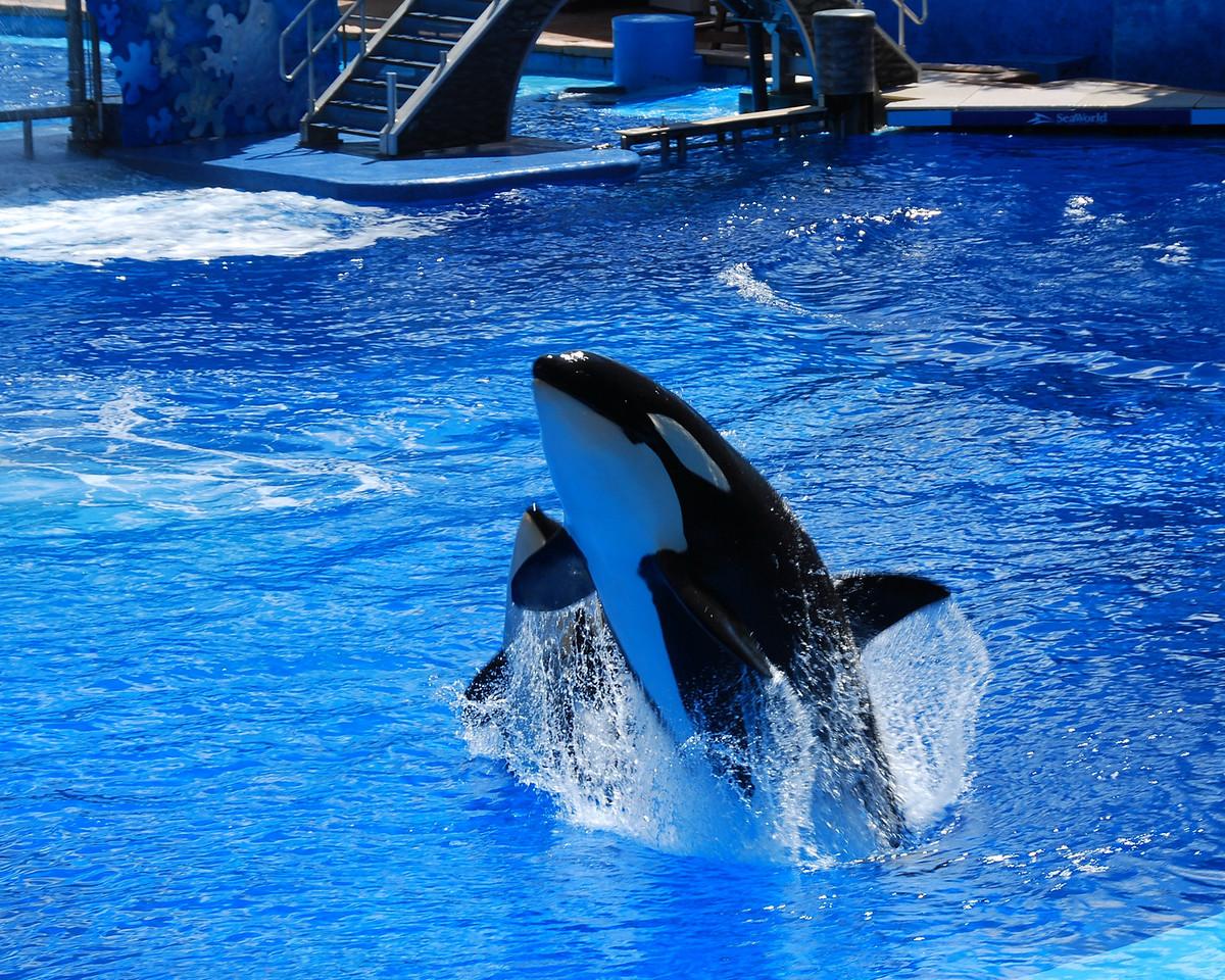 2008 09 13 - SeaWorld with the Calderons 002