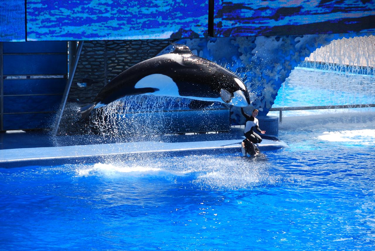 2008 09 13 - SeaWorld with the Calderons 024