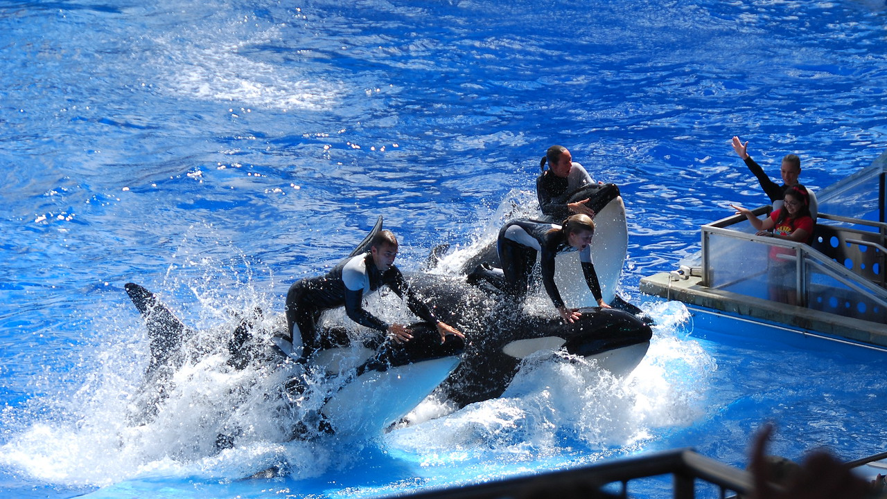 2008 09 13 - SeaWorld with the Calderons 041