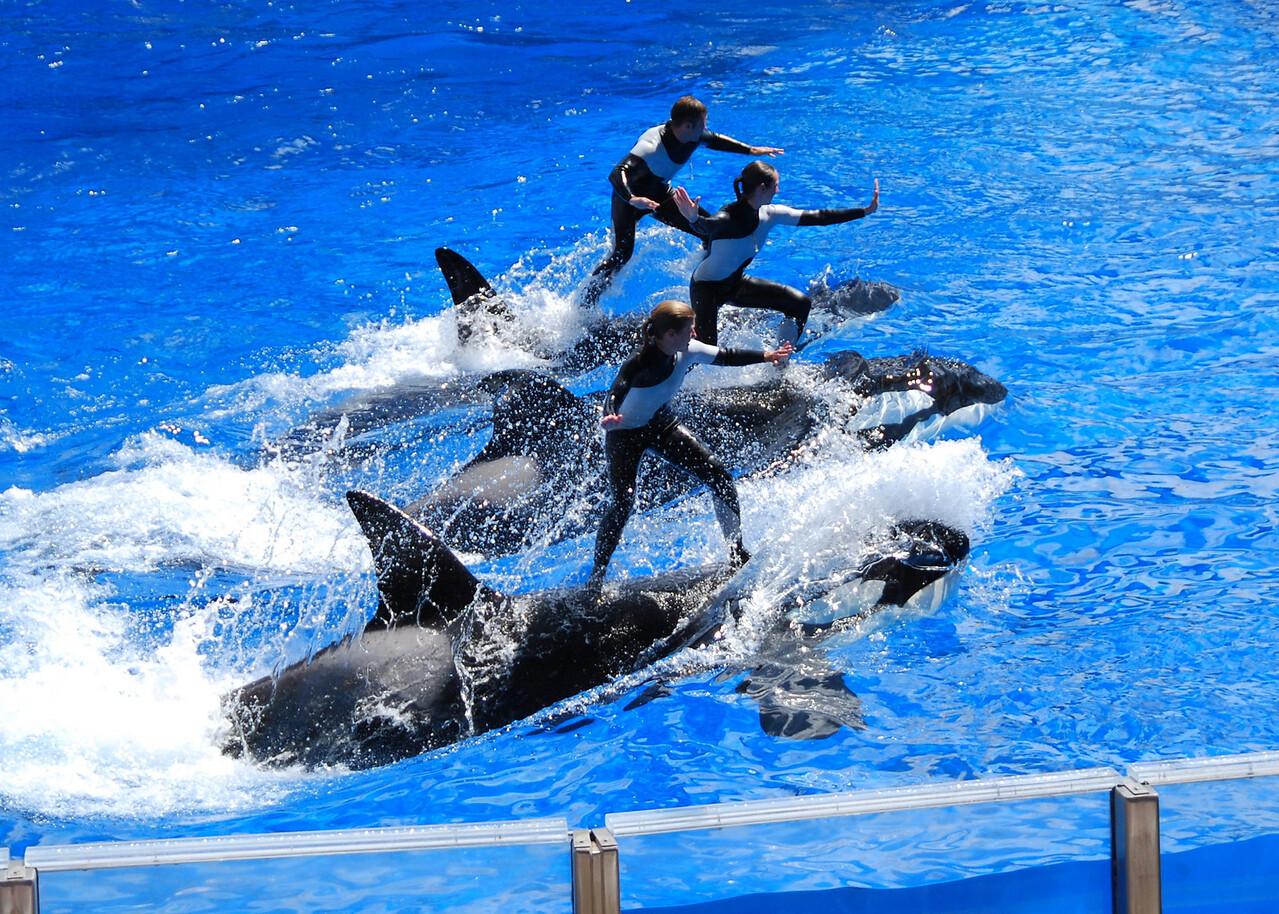 2008 09 13 - SeaWorld with the Calderons 040