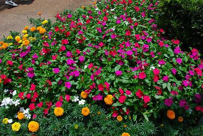 2009 06 20 - Bush Gardens 012