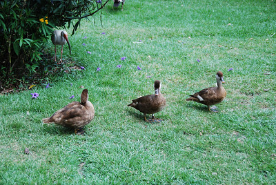 2009 06 20 - Bush Gardens 036